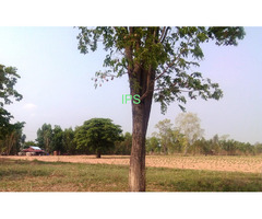 5 Rai Of land in Chaiyaphum