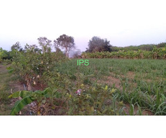 9 rai  Land reasonable priced North Buriram
